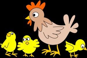 h7n9禽流感症状日常怎么预防h7n9
